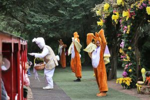 easter-bunnies-love-dancing-audley-end-miniature-railway