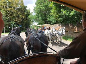 horse-and-carriage-rides-audley-end-miniature-railway-saffron-walden