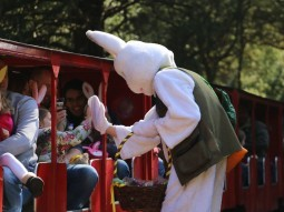 easter-bunny-essex-audley-end-miniature-railway