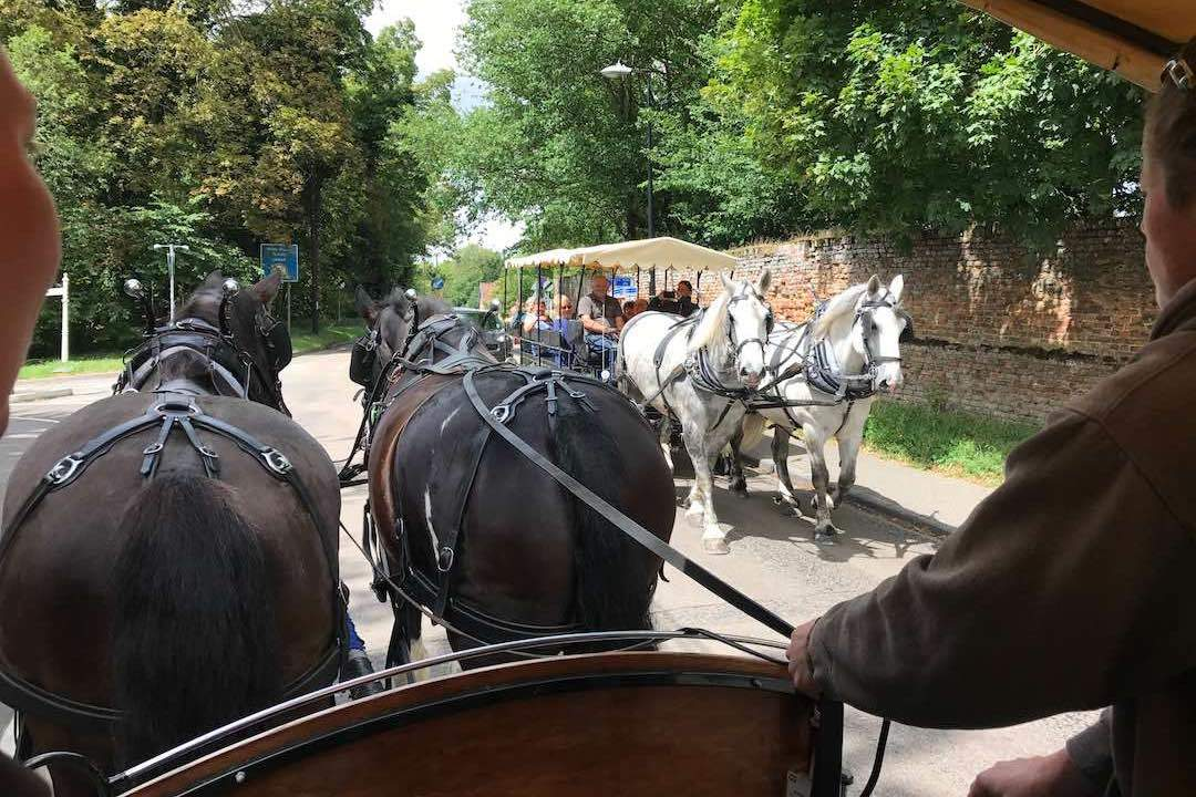 horse-and-carriage-rides-audley-end-miniature-railway-saffron-walden-small
