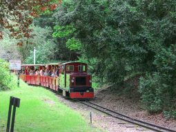 train-rides-essex-audley-end-miniature-railway