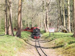 train rides for families in essex