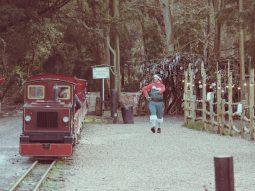 christmas train rides in cambridge for children