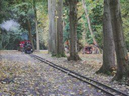 halloween events in cambridge for children