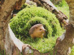 hedgehog habitats audley end miniature railway